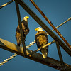 Bald Eagles    (warb)   2018-03-05-3050010