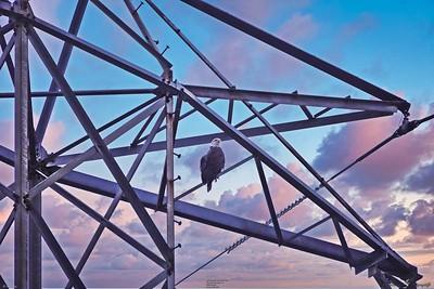 _008_eagle tower_04012021