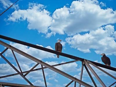 _025_ Bald Eagles_20210227