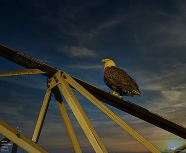 2020-12-26_28_bald eagle