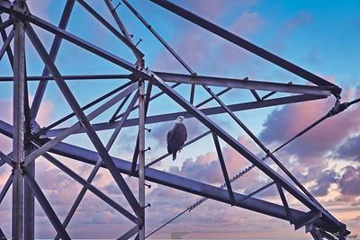 _009_eagle tower_04012021