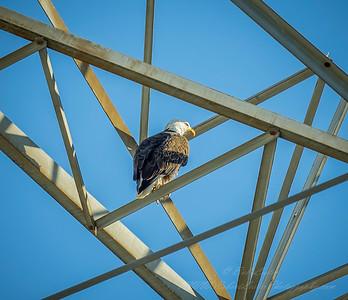 2019-03-08_300,meterspot, eagle__3080173