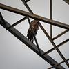 Bald Eagle    (hdr1)   2018-02-20-2200032