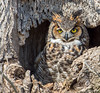 20170317_Great Horned_55-Edit