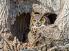20170317_Great Horned_83-Edit