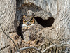 20170317_Great Horned_7-Edit-2