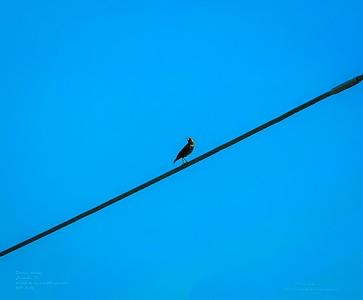 _B050024_ European starling_ photographicnr150