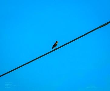 _B050025_ European starling_ photographicnr150