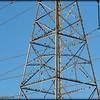 2015-09-30_P9300025_European Starling,Clearwater,Fl