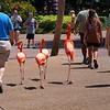 Four tourists strolling thru Busch Gardens