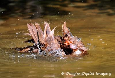 wet_duck005