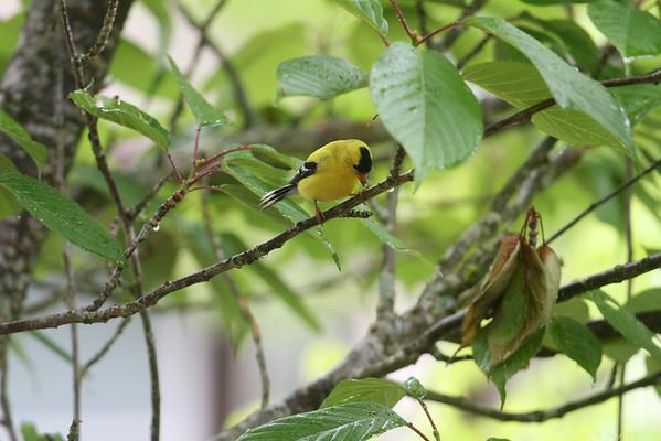 IMAGE: http://photos.deepaksingh.net/Animals/Birds/Garden-Birds/i-DmB7qTt/0/M/IMG_2121-M.jpg