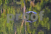 DSC_5479 GBH gliding pc