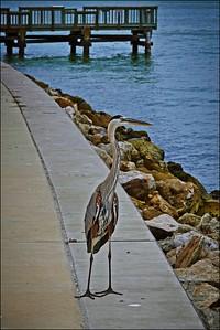 026_Sand Key Fishing Pier_2021-06-21