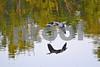 DSC_5481 GBH wings down pc