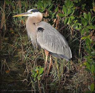 2016-03-02_P3021177_Wall Springs Park,Palm Harbor,Fl