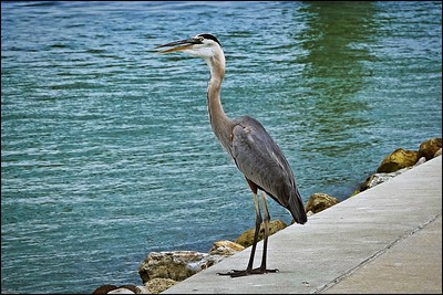 029_Sand Key Fishing Pier_2021-06-21