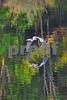 DSC_5475 GBH wings touching water BEST