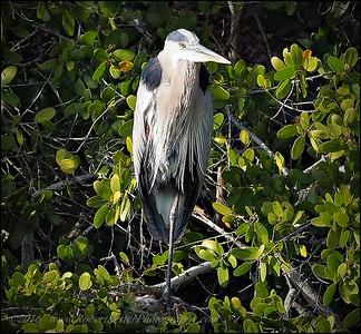 2016-03-02_P3021129_Wall Springs Park,Palm Harbor,Fl