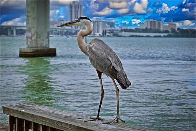 034_Sand Key Fishing Pier_2021-06-21