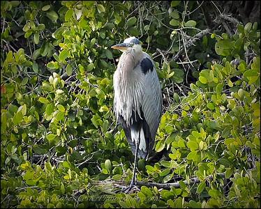 2016-03-02_P3021117_Wall Springs Park,Palm Harbor,Fl