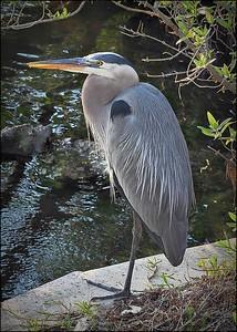 2016-03-02_P3021240_Wall Springs Park,Palm Harbor,Fl