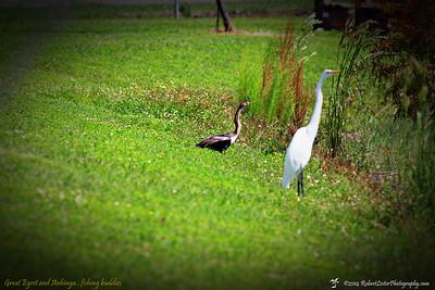 2014-10-15_IMG_6601_ Pinellas Park,Fl
