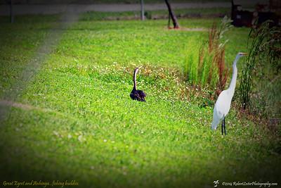 2014-10-15_IMG_6599_ Pinellas Park,Fl