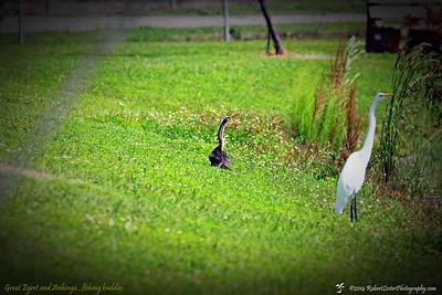 2014-10-15_IMG_6600_ Pinellas Park,Fl