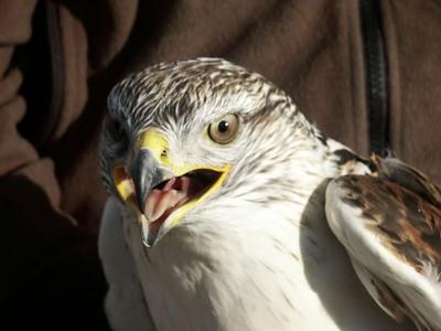 Hawks 2004