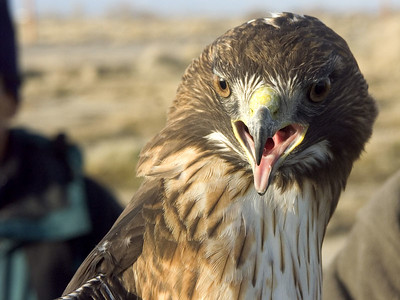 Hawks 2006