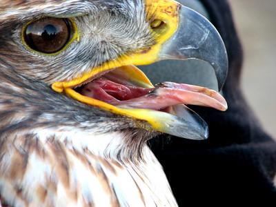 Hawks 2007