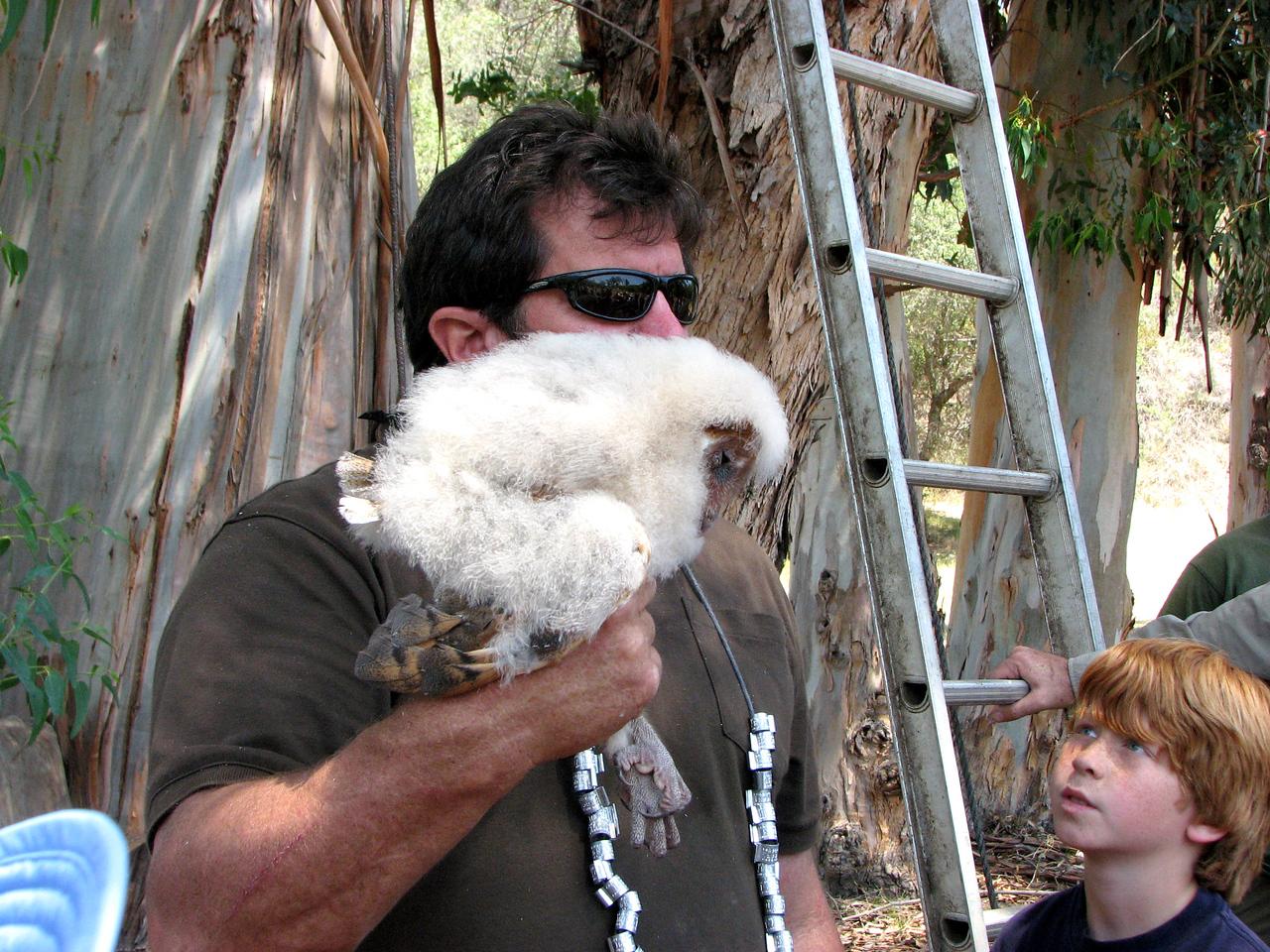 886 Barn Owl