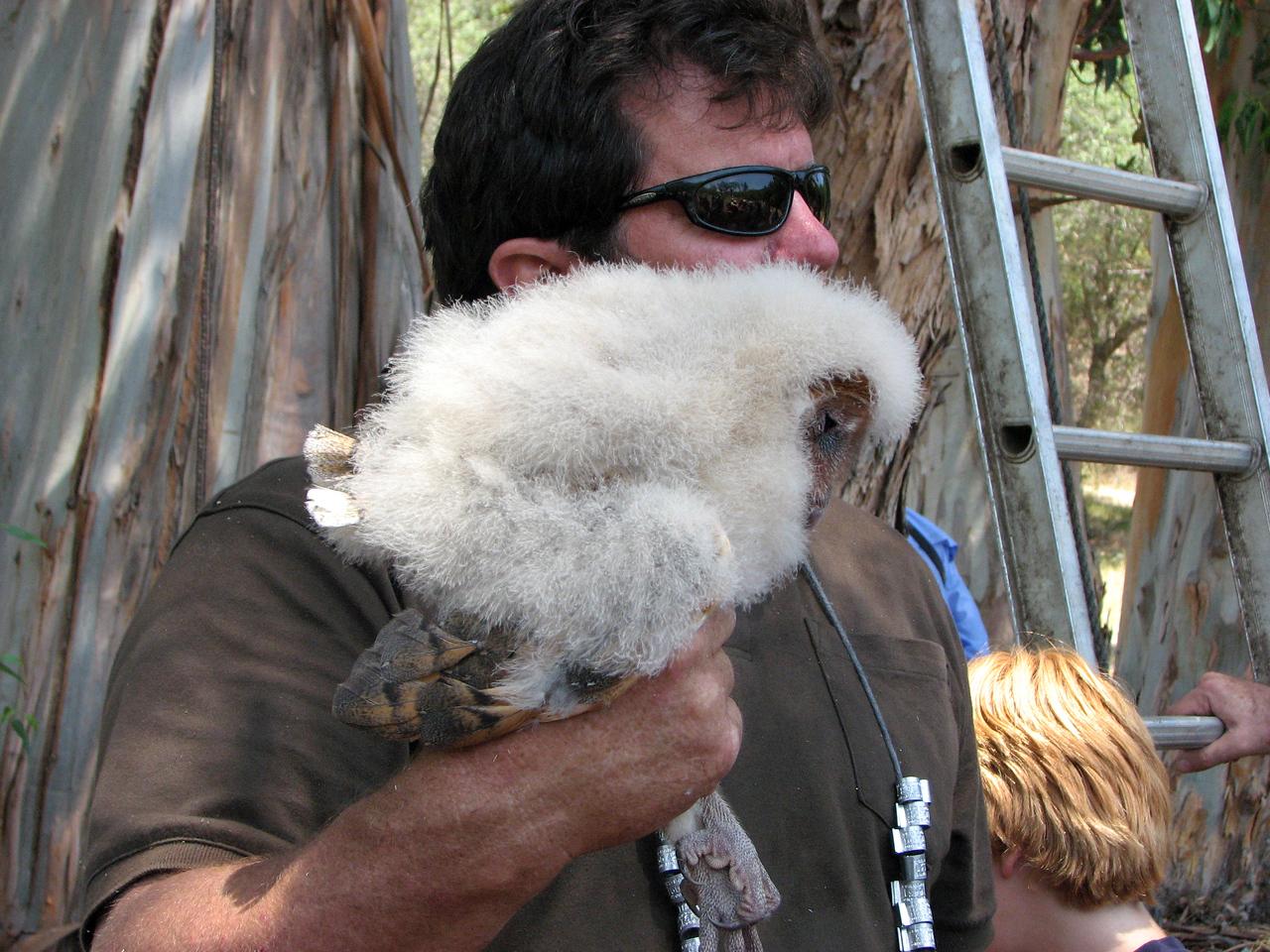 883 Barn Owl