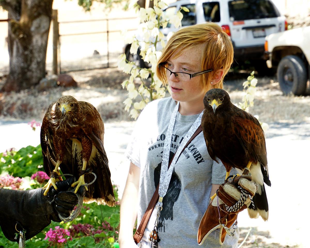 763 Harris Hawks