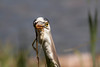 """Great Blue Heron<br /> """"Who's there?"""""""