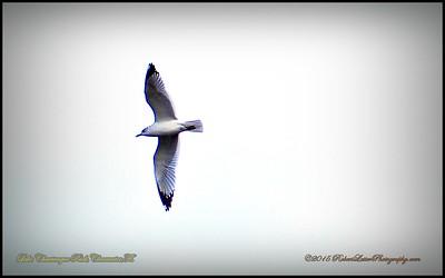 2015-01-09_P1093006_Lake Chautauqua Park,Clearwater,Fl