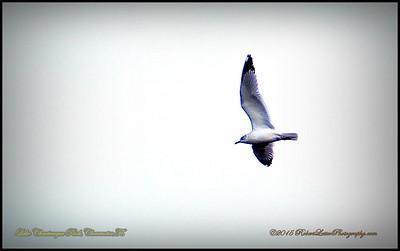 2015-01-09_P1093005_Lake Chautauqua Park,Clearwater,Fl