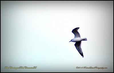 2015-01-09_P1093007_Lake Chautauqua Park,Clearwater,Fl