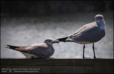 2016-02-23_P2230684_Eagle Lake County Park,Largo,Fl