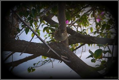 House Sparrow   112312  P1220168