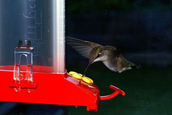 Hummingbirds 09012005