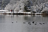 Birders Dave W. & William L., American Coots in foreground.<br /> Lake Shenandoah 12/6/09