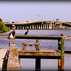 Brown Pelicans , Cormorant and Laughing Gull(winter)...Anna Maria Island Bridge,Holmes Beach,Fl...©2014  RobertLesterPhotography.com