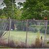 2014-06-23_IMG_4069_Bluejay and Loggerheah Shrike    Clearwater,Fl _