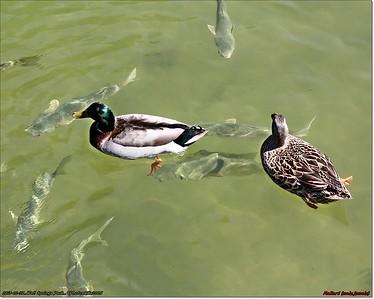 Feb 27,2013_IMG_8682_Wall Springs Park_