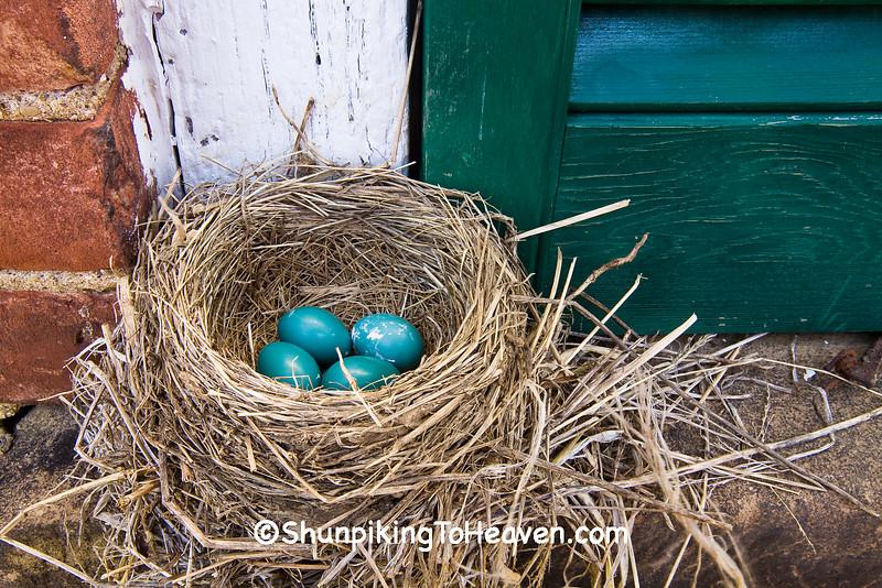 Robin's Nest with Eggs, Washington County, Ohio