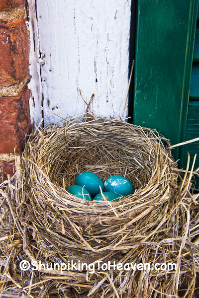 Robin's Nest with Eggs, Washington County, Ohio