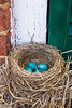 Robin's Nest on Window Ledge, Round Bottom School, Washington County, Ohio