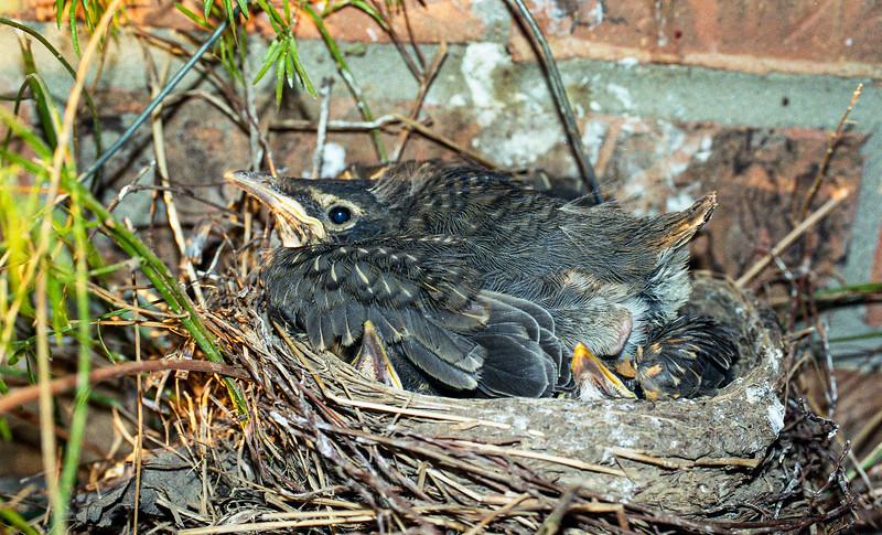 Robin's Nest, Dane County, Wisconsin